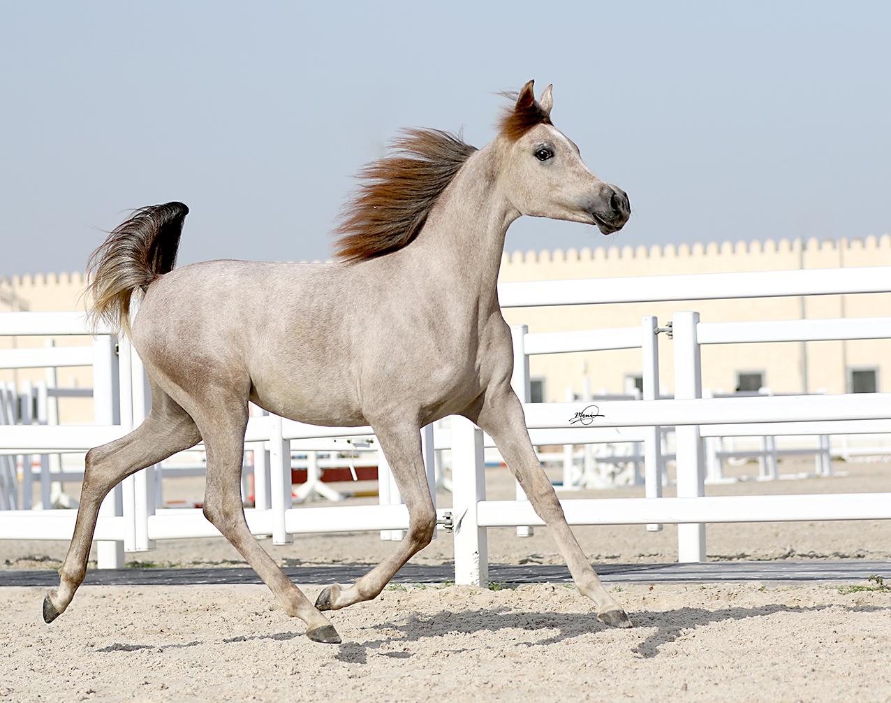 Mandara Equestrian Club-gallery-3